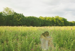 Stewart, Lauren. Leimoniad of the Meadow. 2014. Archival Pigment Print.