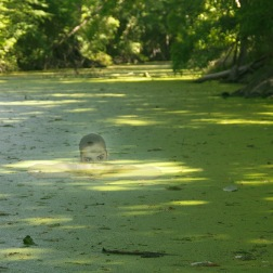 Stewart, Lauren. Potamid of the River. 2014. Archival Pigment Print.