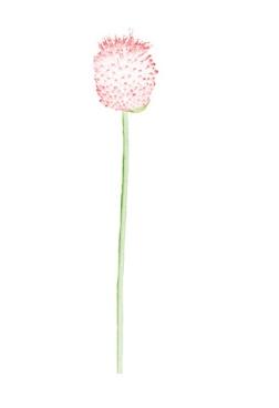 Flora Ray #1