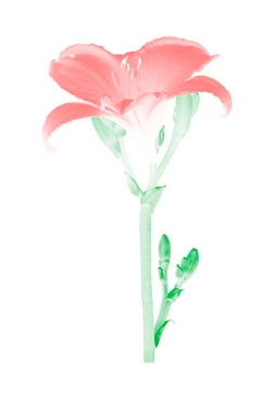 Flora Ray #2