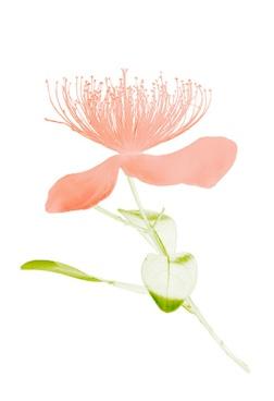 Flora Ray #3