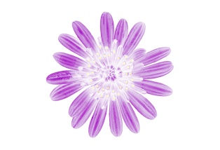 Flora Ray #5