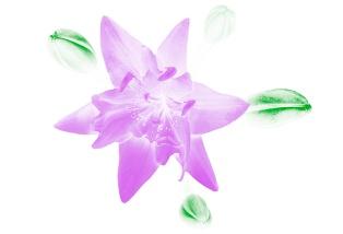 Flora Ray #6