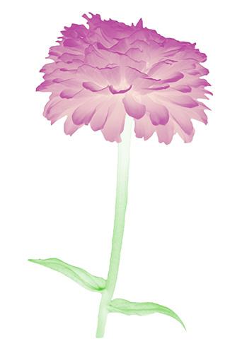 Flora Ray #7