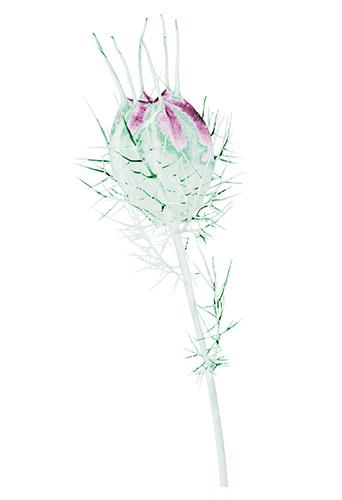 Flora Ray #8